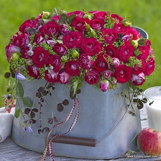 Růže Marie Rottrová