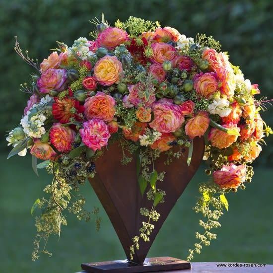 Růže Gartenspass