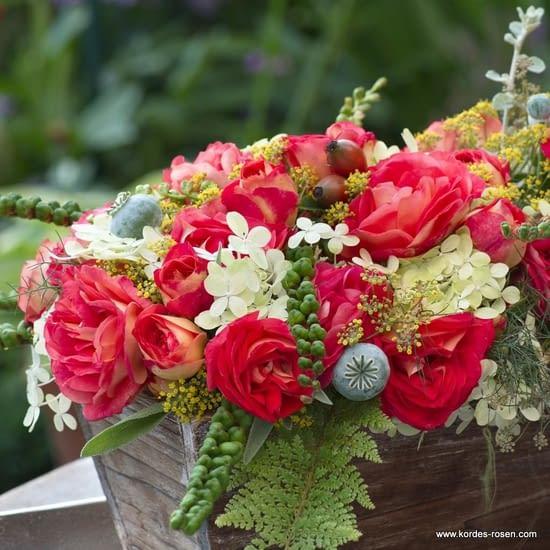 Růže Gebrüder Grimm